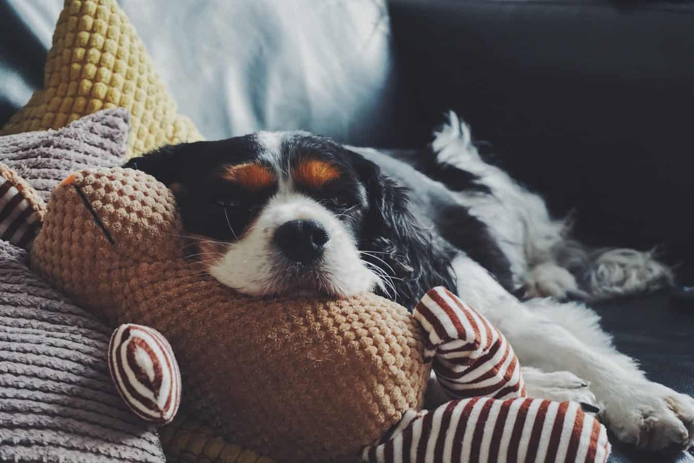 A sleepy puppy resting on some cushions