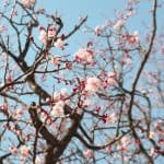 The Science Behind Spring Fever