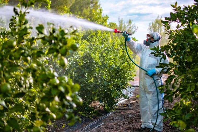 Farmer in protective clothes spraying pesticides onto fruit trees